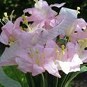 Wonderful Flowers from Katies for your own special memory of springtime
