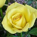 Katies Flowers and Gifts - A Stylish and High-Quality Online Flower, Plant and Gift Boutique